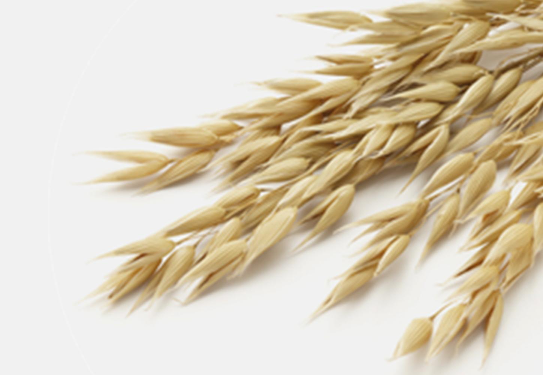 How does oatmeal help protect skin?