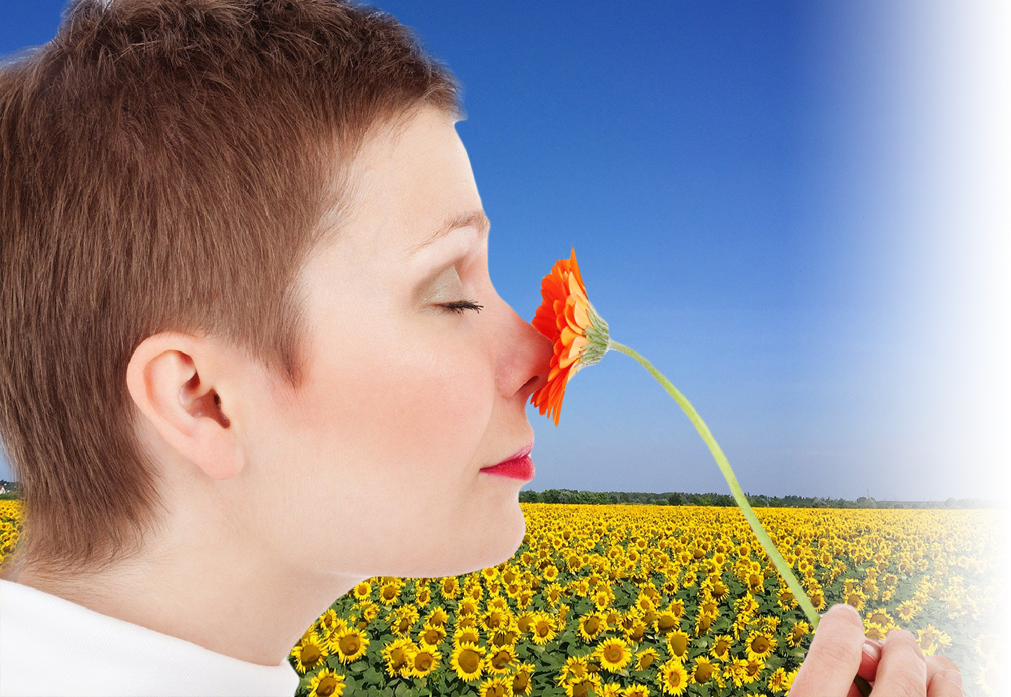 How do hay fever relief nasal sprays work?